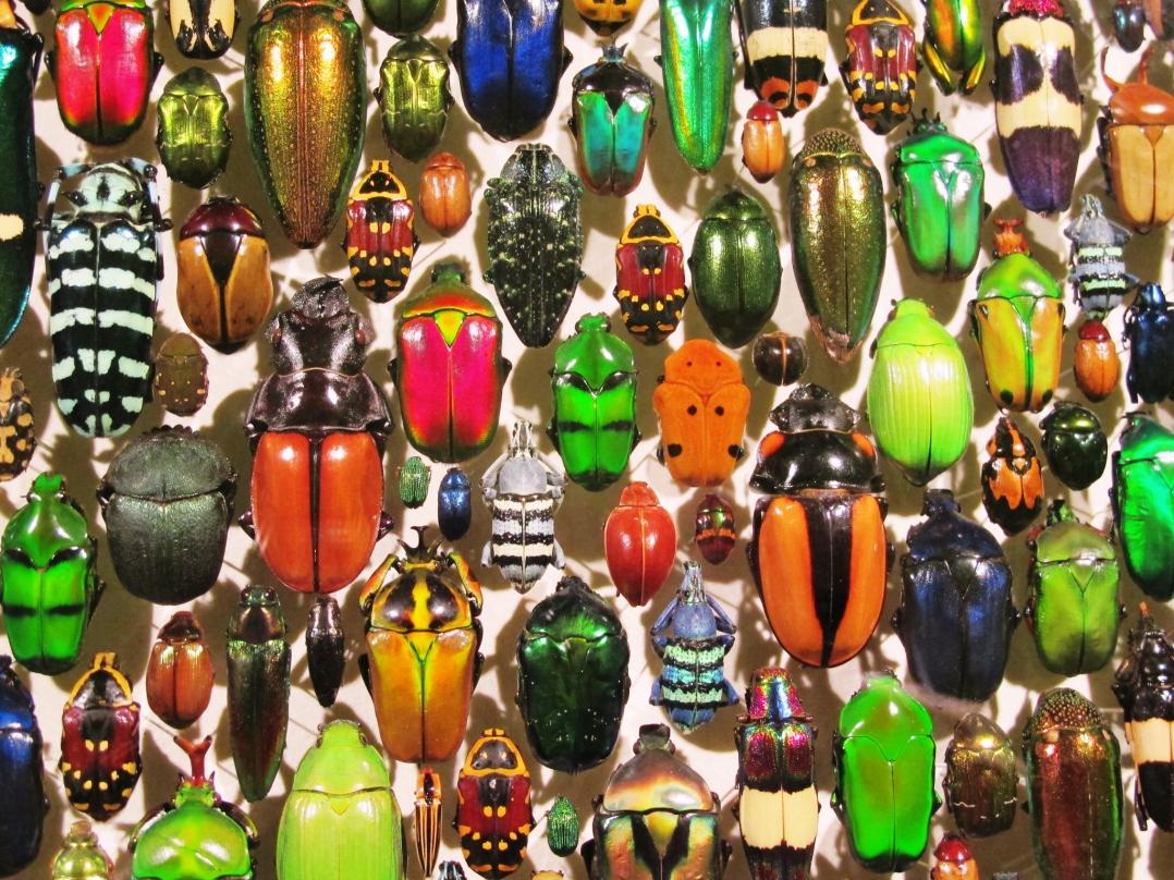 monreal-insectarium-1
