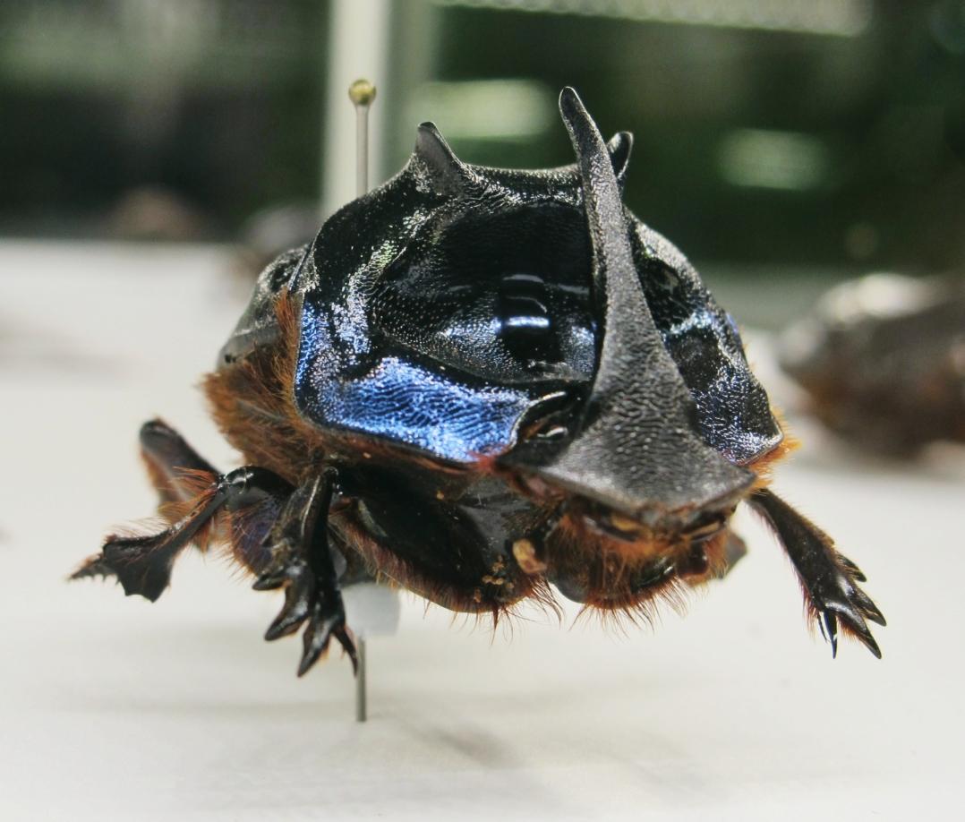 monreal-insectarium-2
