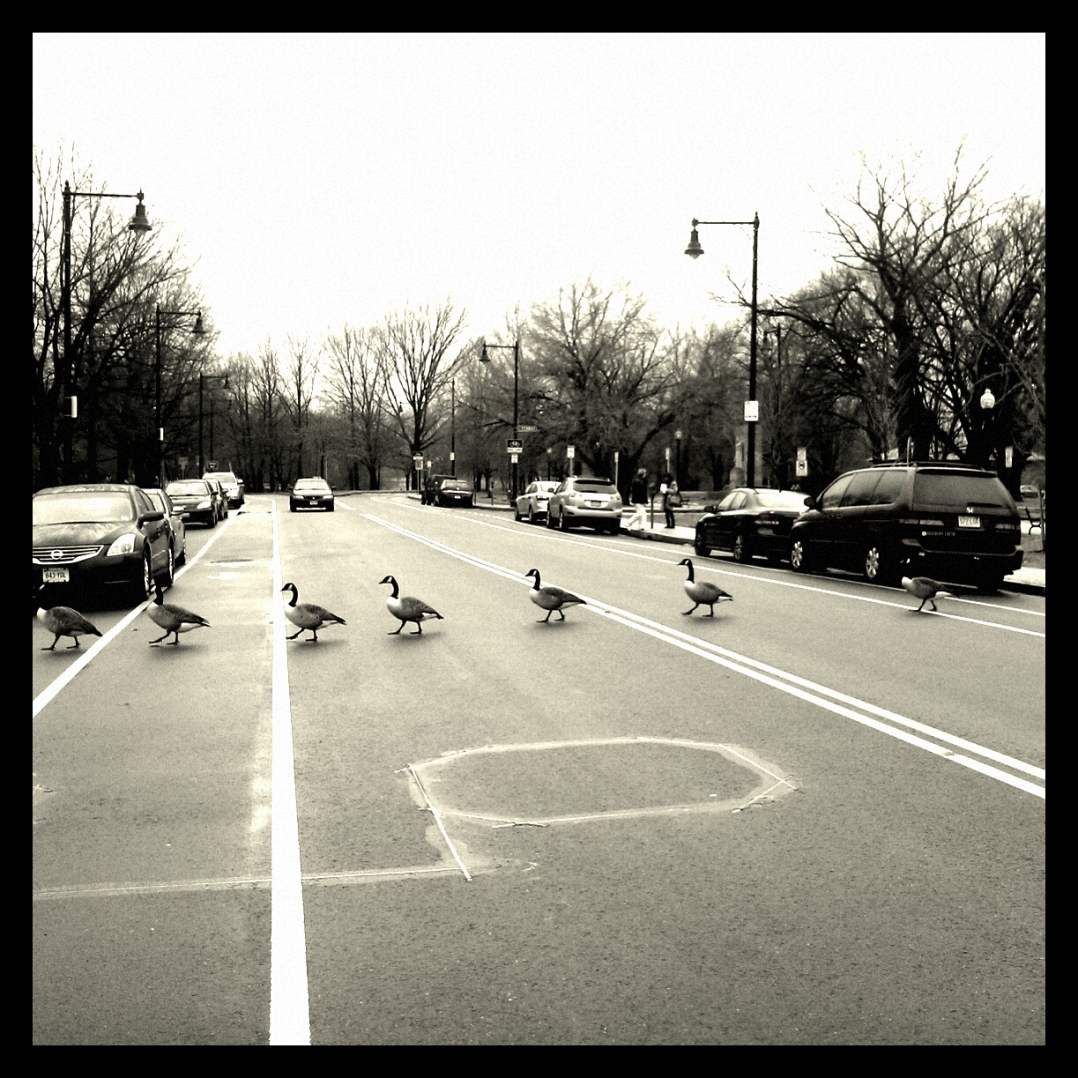 1-geese