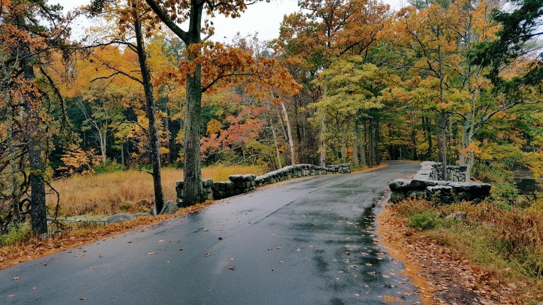 autumn-in-tospfield-2016-11