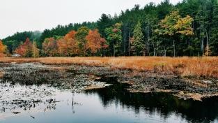 autumn-in-tospfield-2016-14