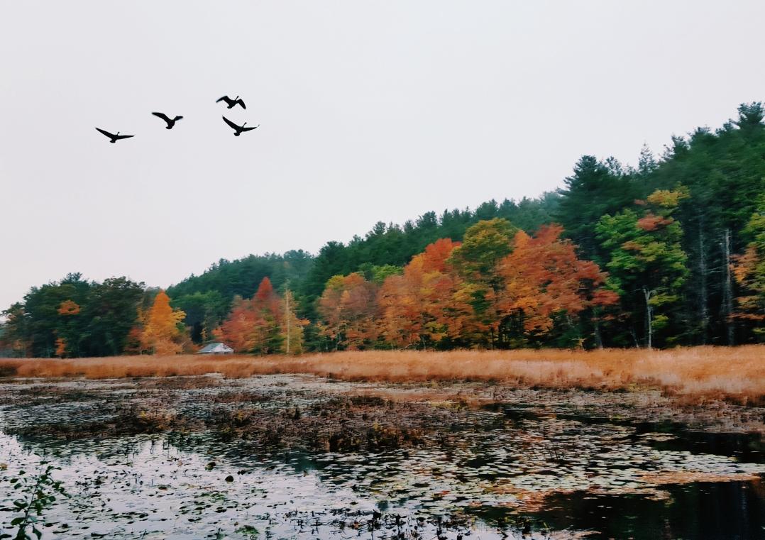 autumn-in-tospfield-2016-15