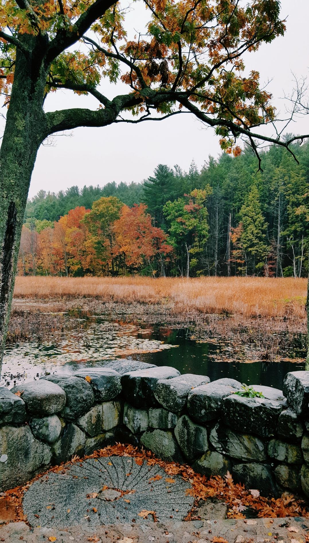 autumn-in-tospfield-2016-18
