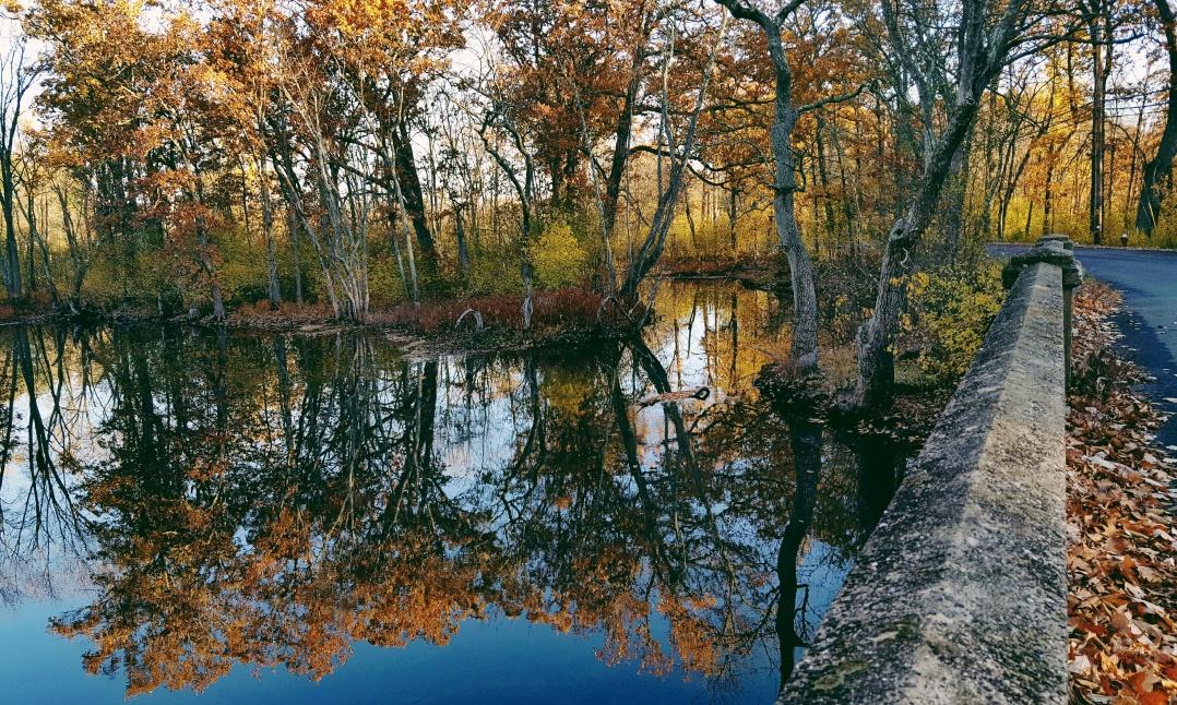 autumn-in-tospfield-2016-4