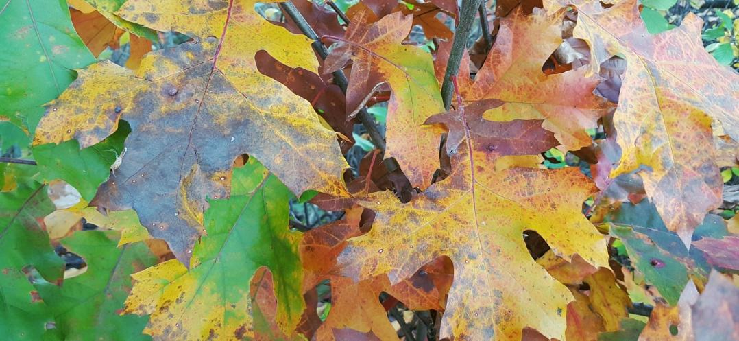 autumn-in-tospfield-2016-6