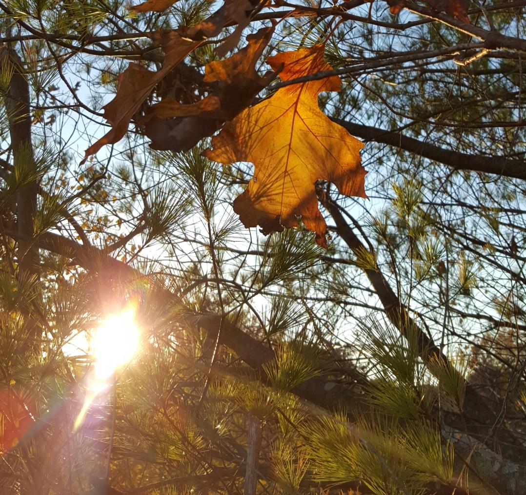 autumn-in-tospfield-2016-7
