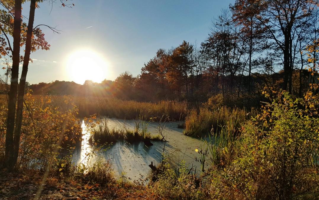 autumn-in-tospfield-2016-8