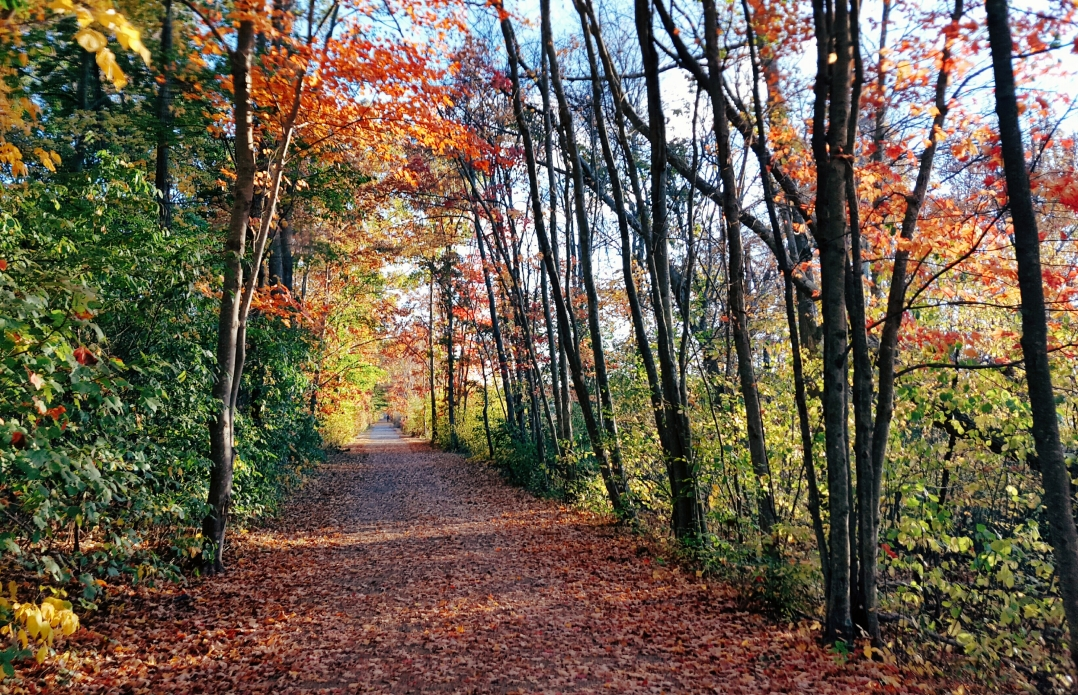 autumn-in-tospfield-2016-9
