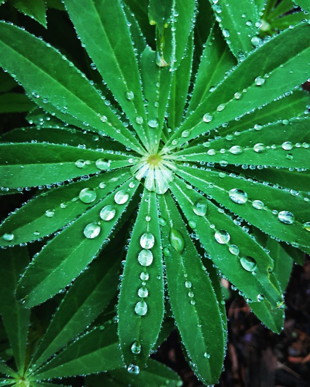 Drops (8)