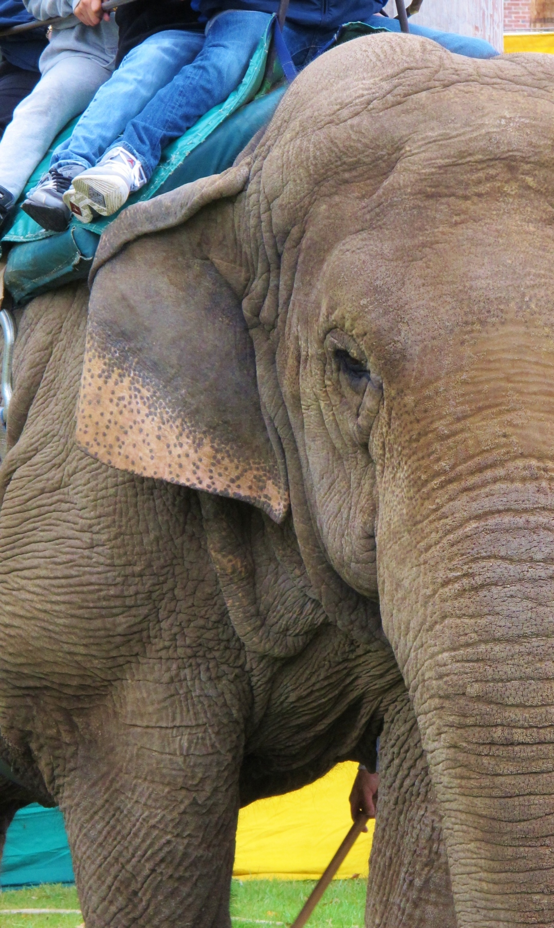 fair-elephant-abuse-2