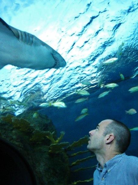shark-bonding