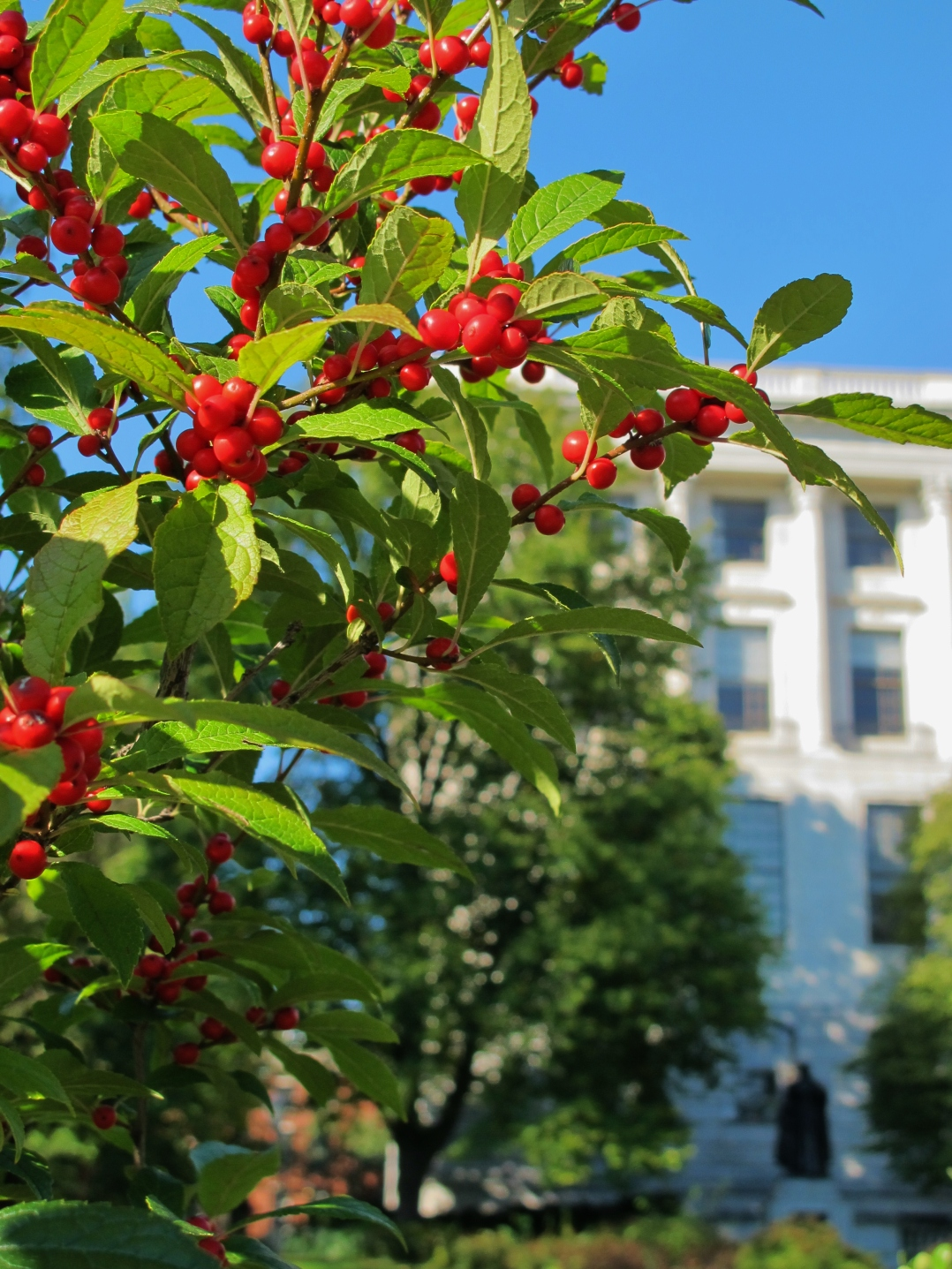 state-house-berries-2