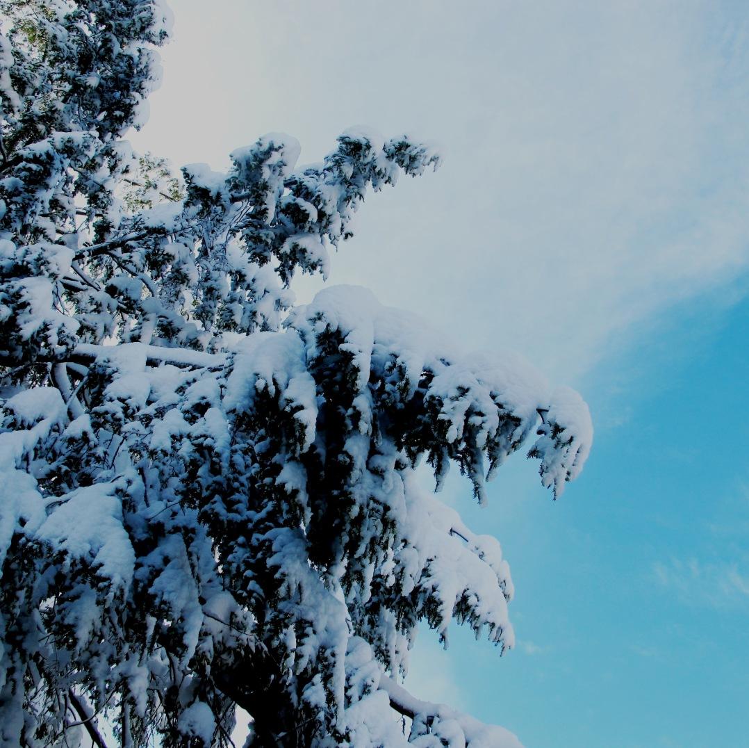 topsfield-2-5-16-snow-storm-6