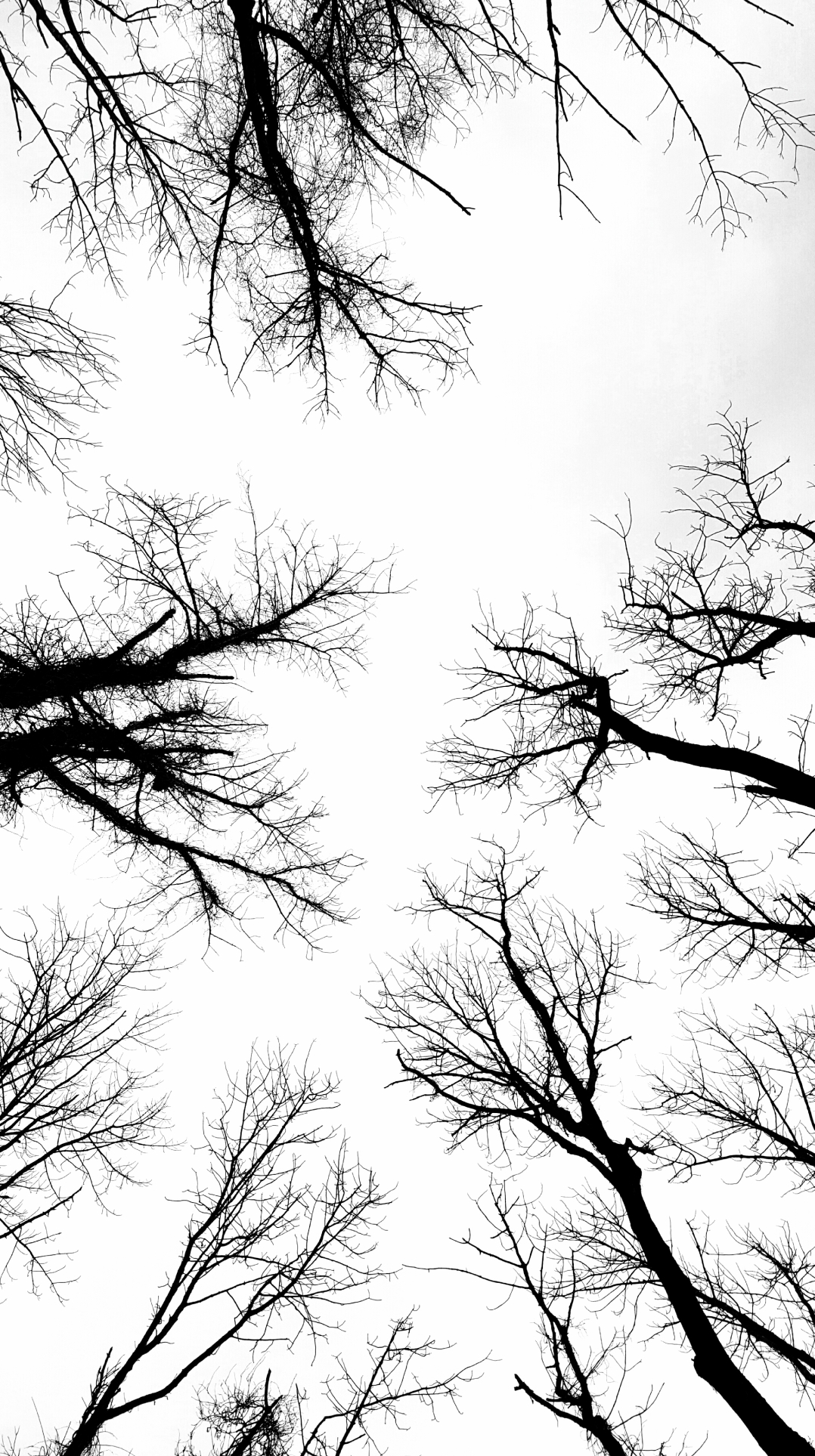 trees-that-looks-like-neurons-1