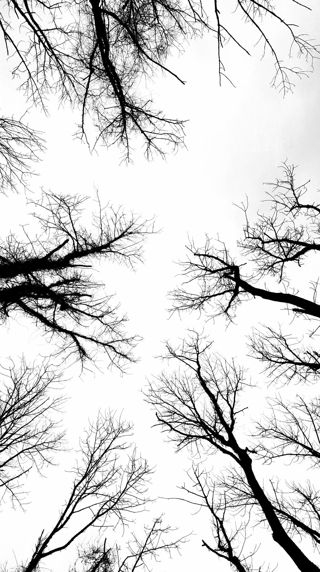 trees-that-looks-like-neurons-1