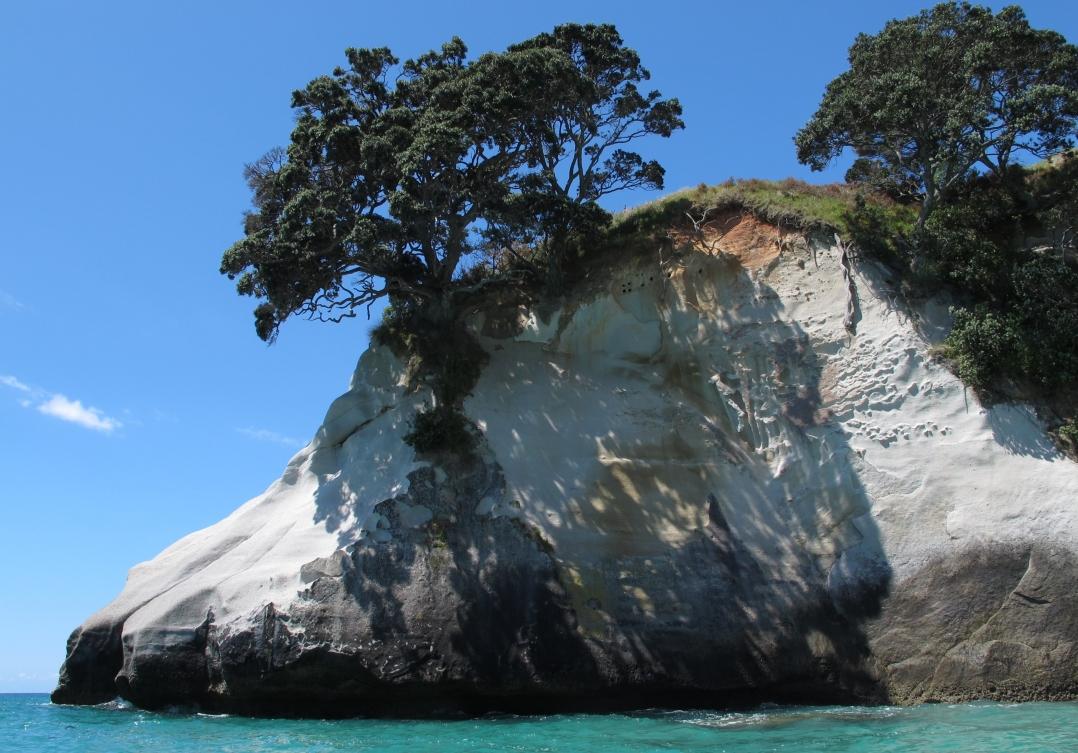 17-rock-trees
