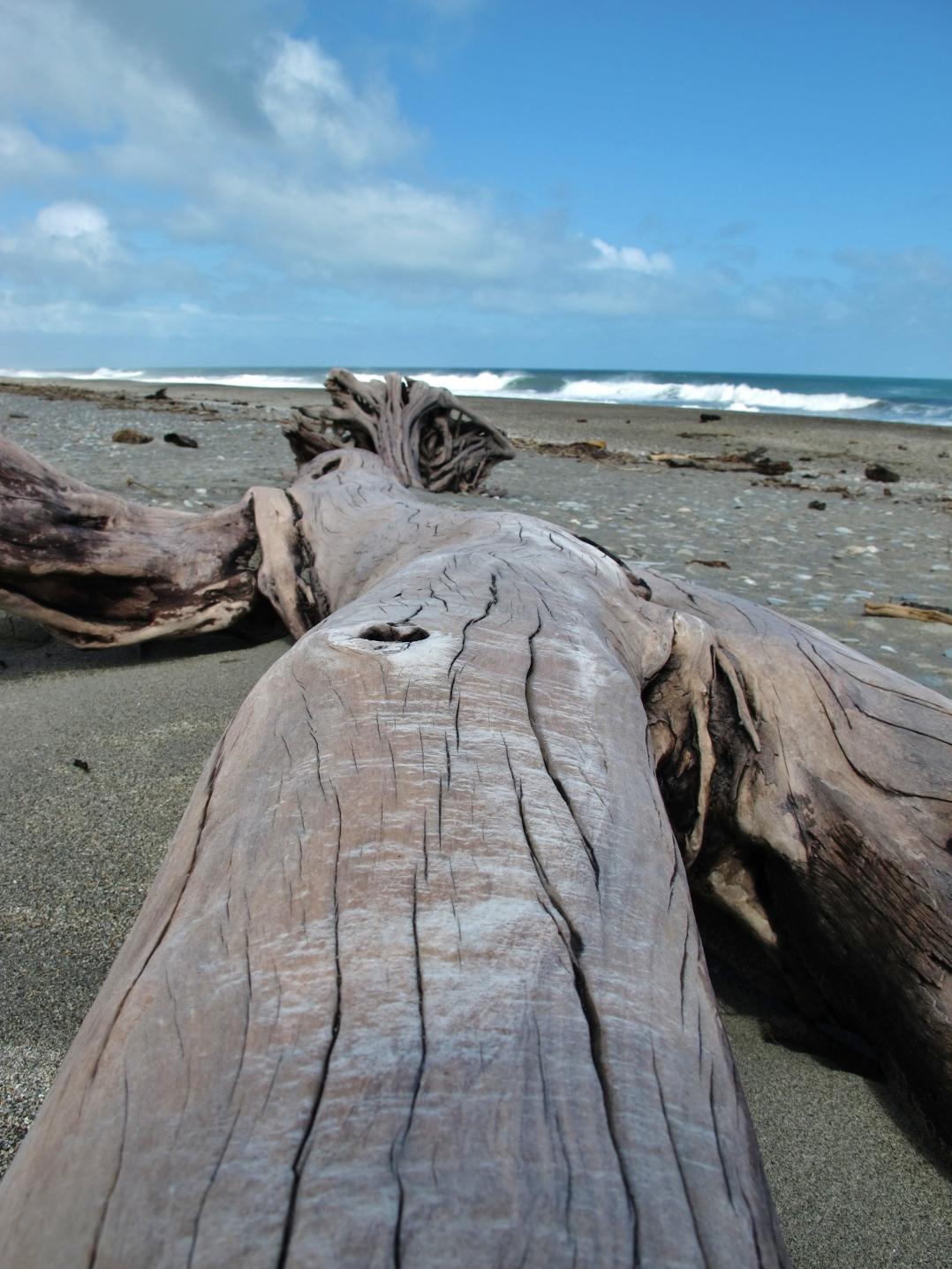 25-driftwood