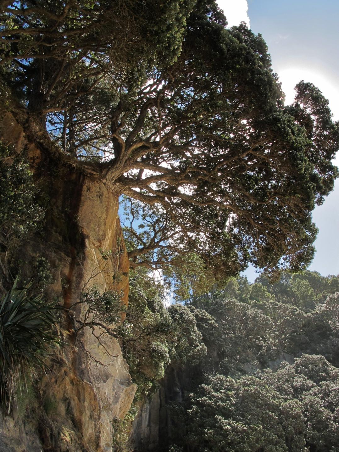 58-cliff-trees