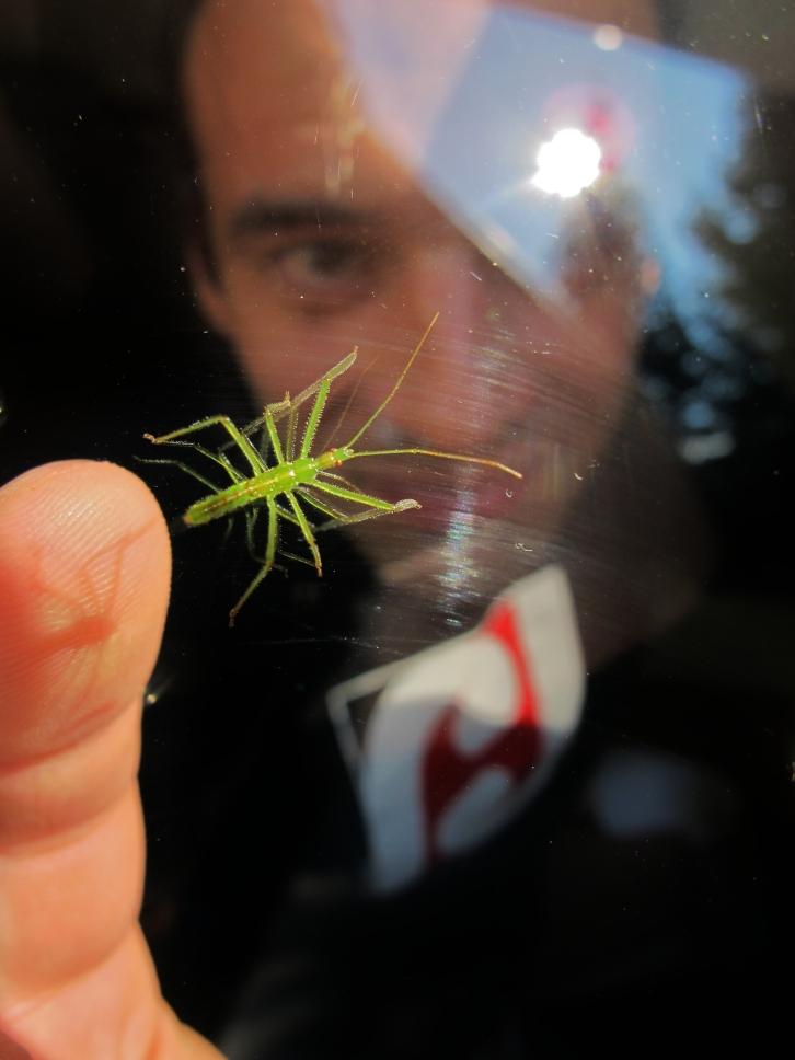 bug-whisperer