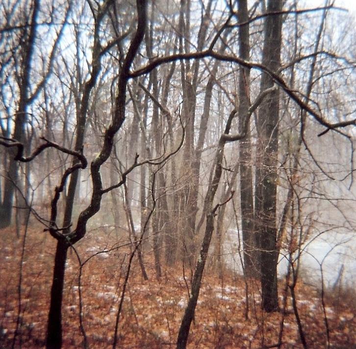 ct-woods-3