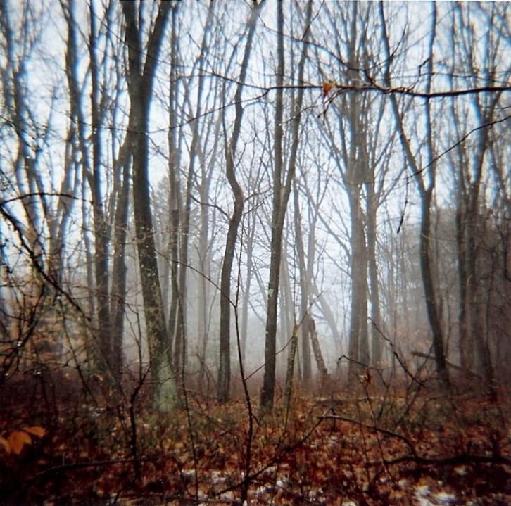 ct-woods-4