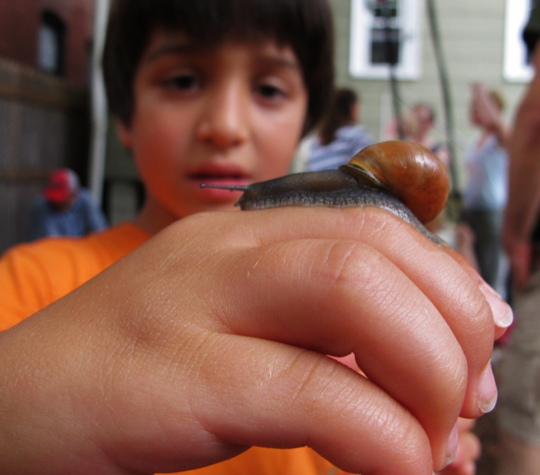 the-snail