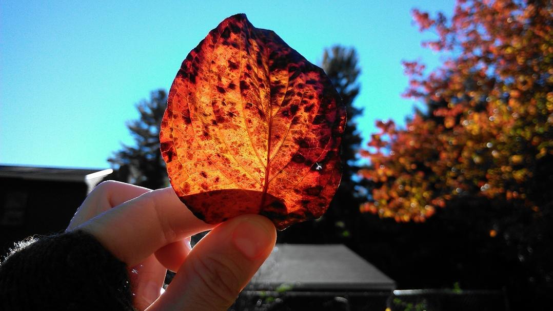Autumn Tospfield 2015