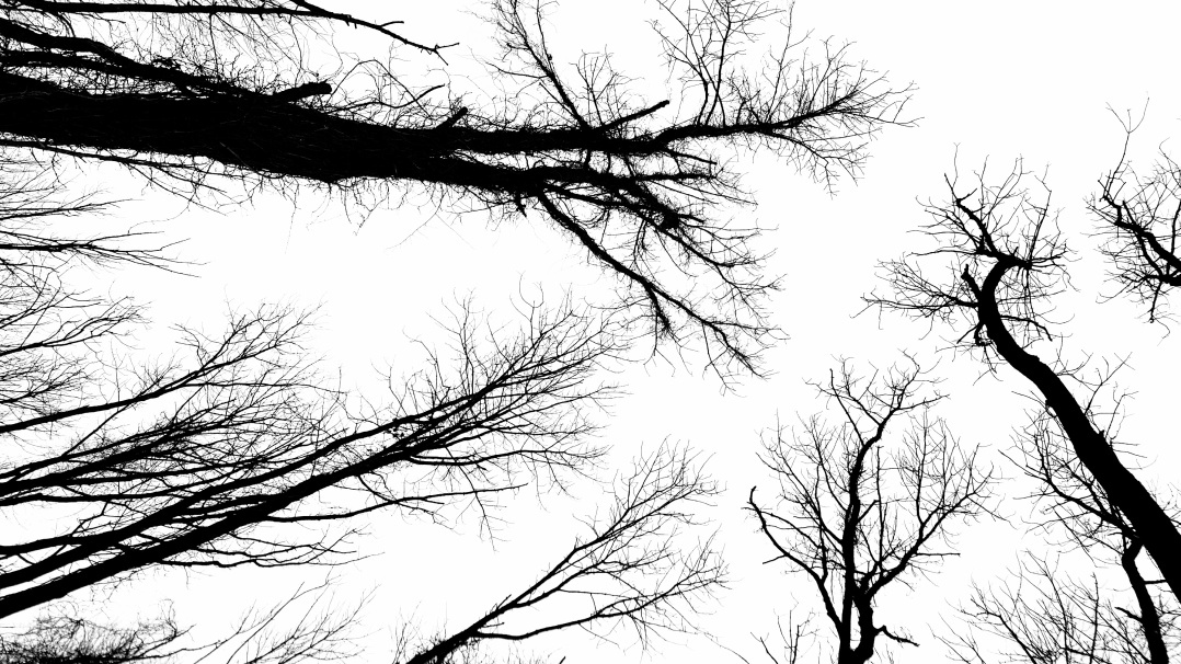 Trees that looks like neurons (3)