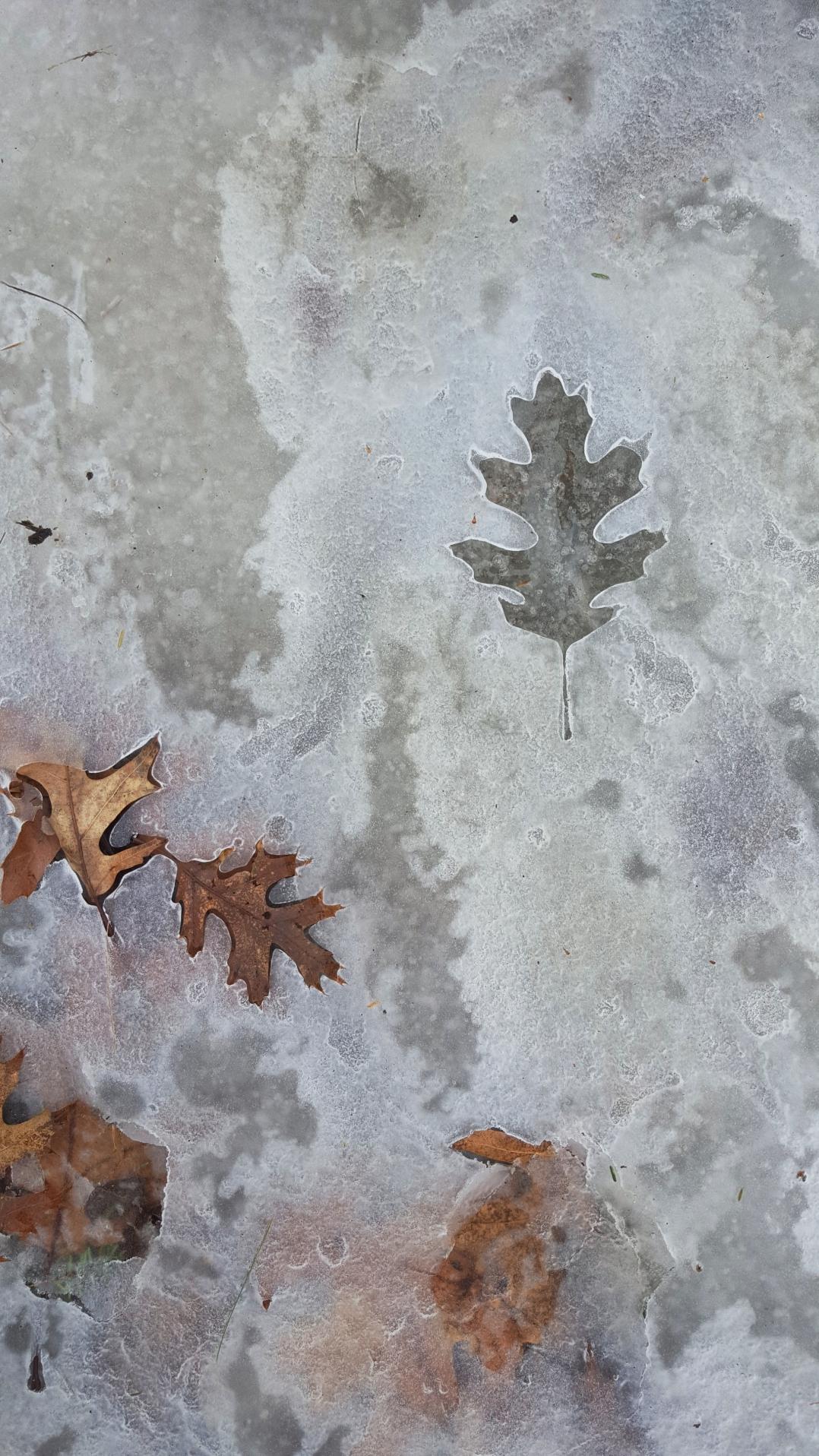 Ice leaf print wide