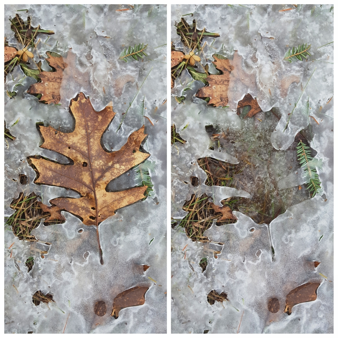 Ice leaf prints (1)