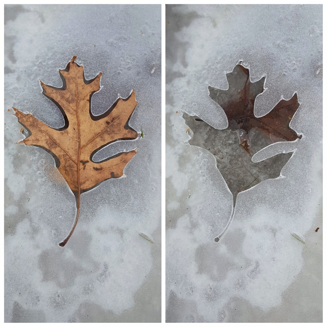 Ice leaf prints (2)