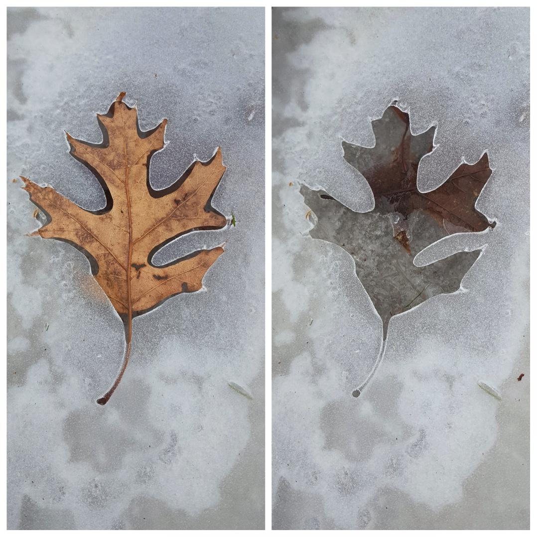 Ice leaf prints (2)