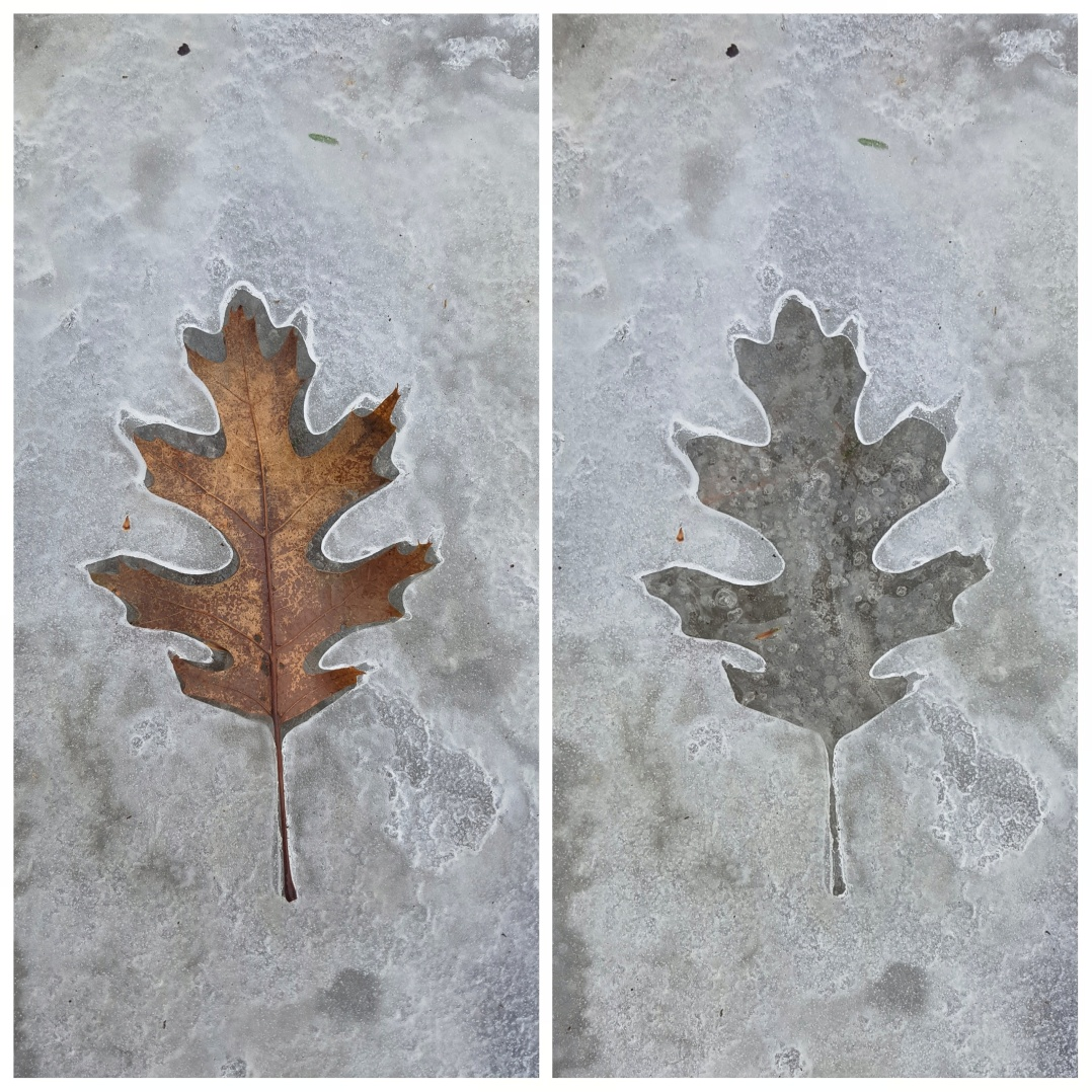 Ice leaf prints (3)