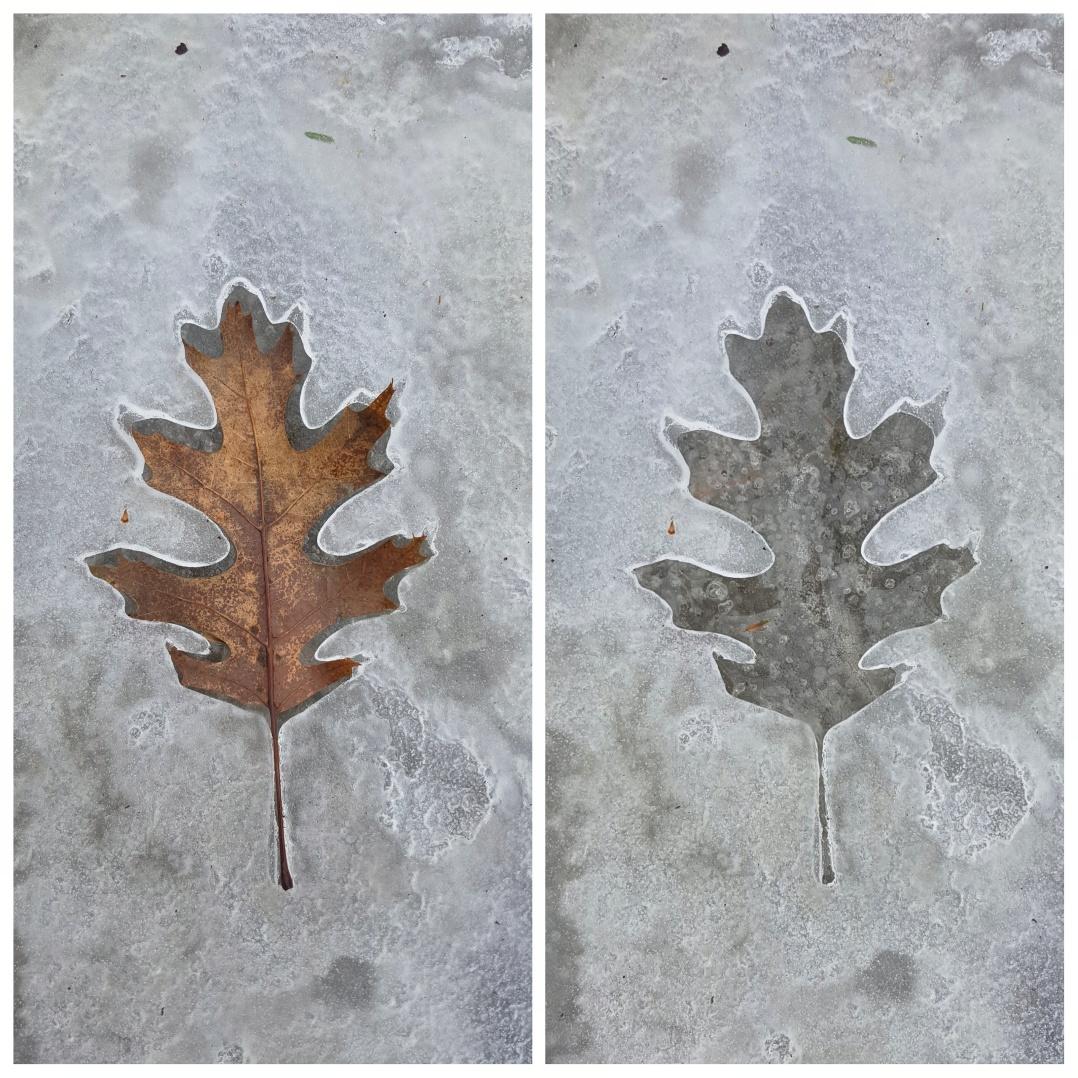 Ice leaf prints (3)