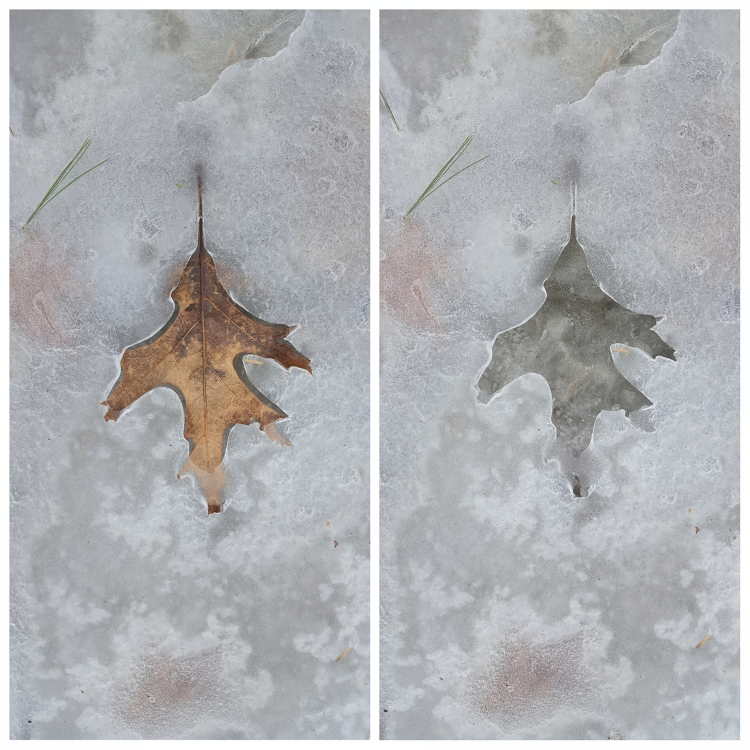 Ice leaf prints (5)