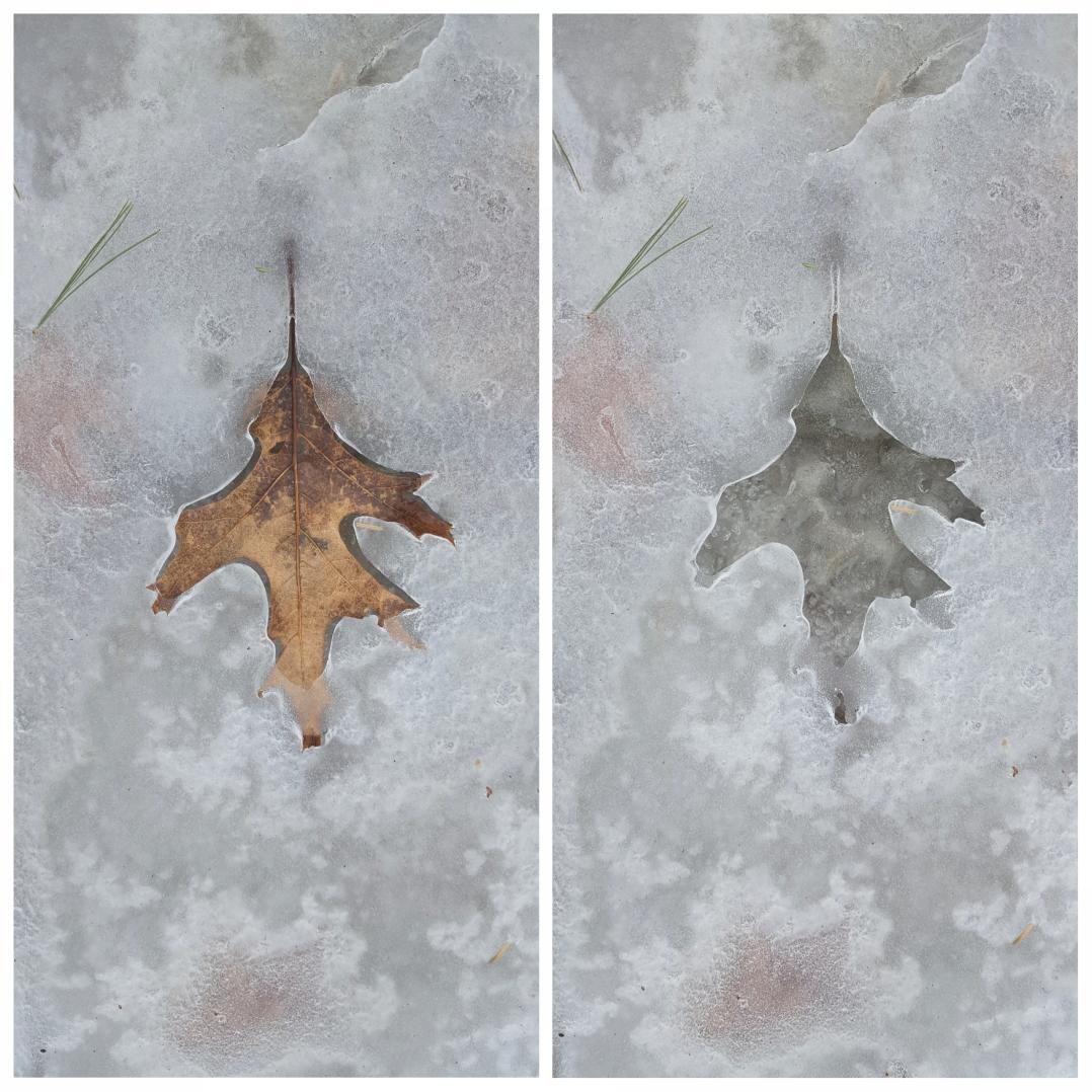 Ice leaf prints (5)