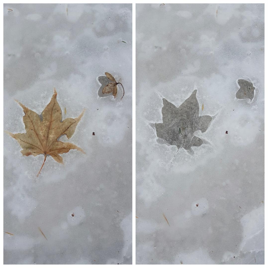 Ice leaf prints (6)