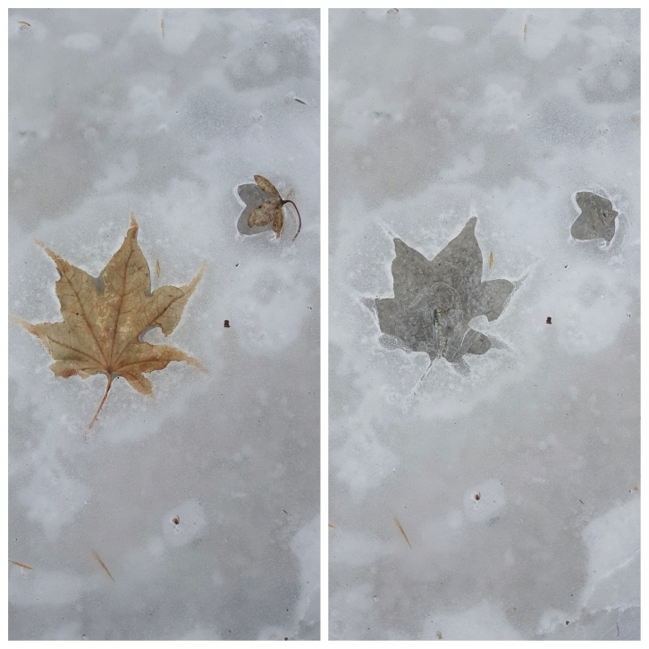 Ice leaf prints (6)